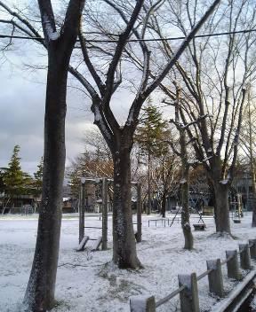 こちらも…雪